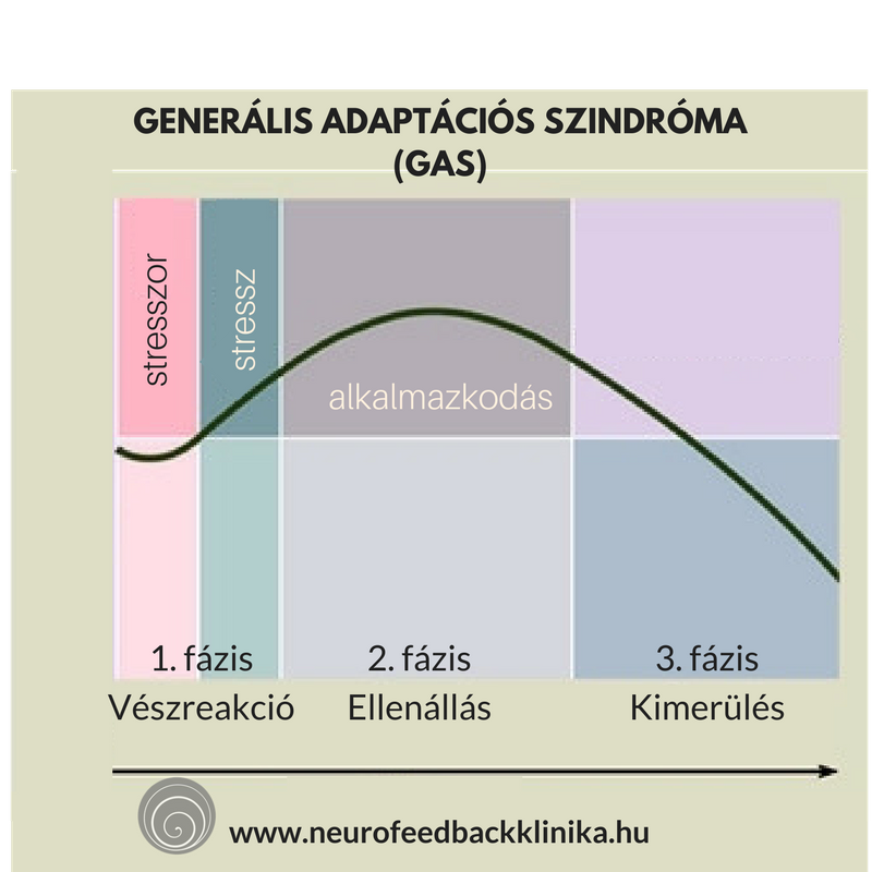 Generális adaptációs szindróma stressz
